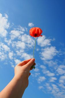 Free Poppy In Hand Royalty Free Stock Photography - 10094707