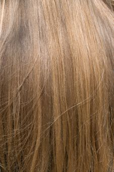 Free Female Hair. Stock Photography - 10094992