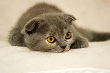 Free Kitten With Emerald Eyes Stock Photography - 10095312