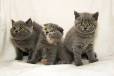 Free Three Small A Kitten With Emerald Eyes Royalty Free Stock Images - 10095329