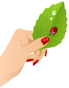 Free Vector Female S Hand With Leaf Royalty Free Stock Images - 10097299