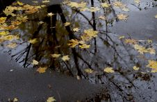 Leaves And Trees In The Autumnal Reflection Stock Photos
