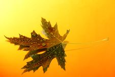 Free Green Leaf With Drops Royalty Free Stock Photography - 10098607