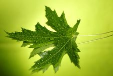 Free Green Leaf With Drops Royalty Free Stock Images - 10098689