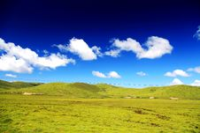 The Alpine Grassland Scenery On The Qinghai Tibet Plateau Stock Image