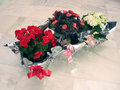 Free Gift Flower-Pots Stock Photo - 1018890