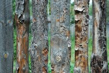 Free Pine Fence Royalty Free Stock Image - 1010046
