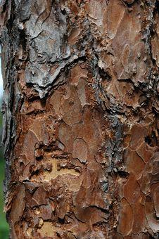 Free Pine Plank Stock Image - 1010051