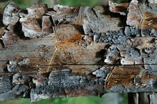 Free Pine Plank Royalty Free Stock Photos - 1010098