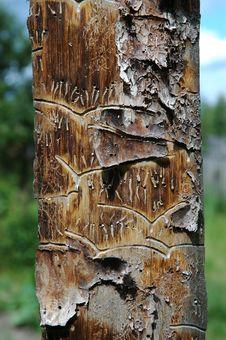 Free Pine Plank Stock Photography - 1010112