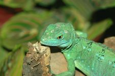 Free Water Dragon Stock Images - 1011404