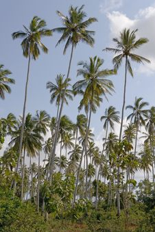 Free Palms On The Beach Royalty Free Stock Image - 1011626