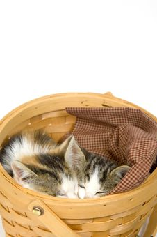 Free Kittens Sleeping In A Basket Royalty Free Stock Image - 1012756