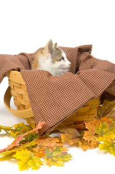 Free Kittens In A Basket With Fall Leaves Stock Image - 1012761