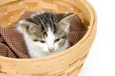 Free Kitten In A Basket Royalty Free Stock Images - 1012769