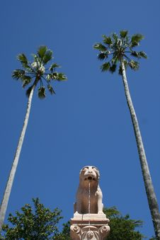Free A Lion And Two Palm Trees Royalty Free Stock Photos - 1013178