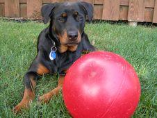 Free Dog And Big Ball Stock Photo - 1013220