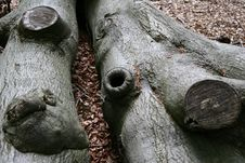Trees And Trunk An Roots Royalty Free Stock Image