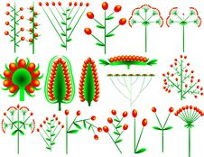 Free Flower Compositae Stock Image - 1015031