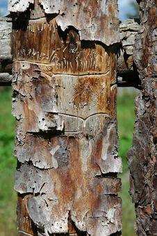 Free Pine Plank Royalty Free Stock Photos - 1015128