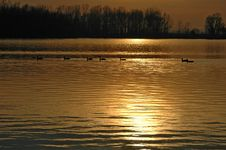 Free Ducks On A Lake During Sunset Royalty Free Stock Images - 1015859