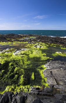 Free Seaweed Stock Images - 1015984