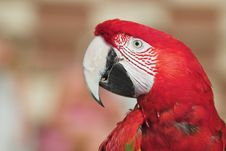 Free Green Winged Macaw Stock Photos - 1016743