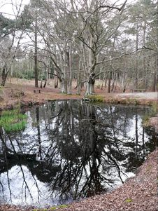 Free Woodland Reflection Royalty Free Stock Image - 1016746