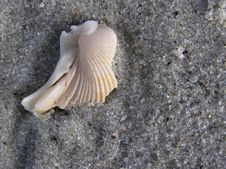 Shell 1 On Myrtle Beach Stock Images