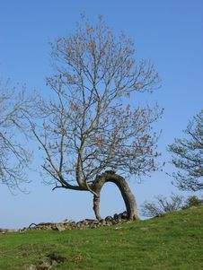 Tree Forming Natural Arch Royalty Free Stock Photography
