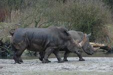 Rhino Gang Stock Image