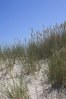 Free Sand Dune, Grasses And Blue Sky Stock Images - 1019484