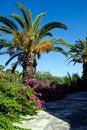 Free Palm Tree Royalty Free Stock Photos - 10108768