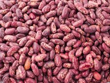 Free Haricot Beans Royalty Free Stock Image - 10100696