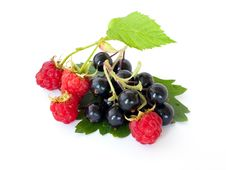 Black Currant And Raspberry. Stock Photo