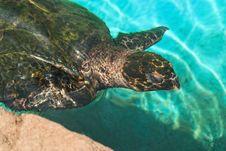 Free The Green Turtle Stock Photo - 10101100