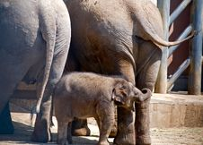 Free Baby Elephant Royalty Free Stock Photo - 10101585
