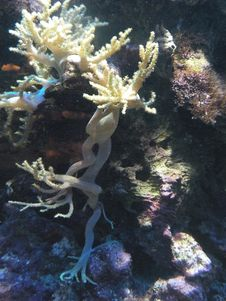 Free Coral Reef Royalty Free Stock Images - 10102049