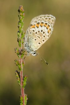 Free Silver Studded Blue Butterfly Royalty Free Stock Photos - 10103058