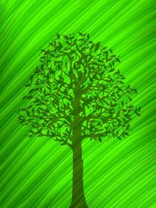 Green Tree Shadow Over A Big Leaf Stock Photo