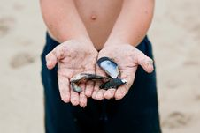 Free Boy Holding Shells In Hands Royalty Free Stock Photos - 10103838