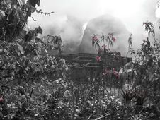 Free Machu Picchu Behind Pink Flowers Royalty Free Stock Image - 10106486