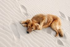 Dog On The Beach Stock Images