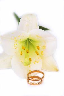 Free Ring Stock Photo - 10108610