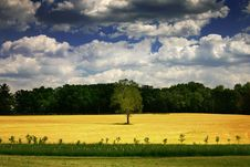 Free Clouds Over A Field With A Lone Tree Royalty Free Stock Photography - 10109607