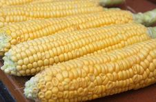 Free Corn Stock Image - 10109751