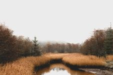 Free Waterway, Wetland, Reflection, Nature Reserve Stock Images - 101009614