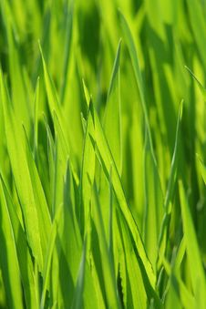 Free Grass, Green, Field, Grass Family Stock Photo - 101009930