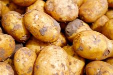 Free Root Vegetable, Potato, Yukon Gold Potato, Food Royalty Free Stock Photo - 101010465