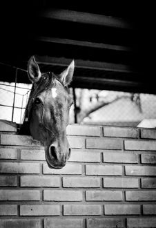 Free Horse, White, Black, Black And White Stock Images - 101011704